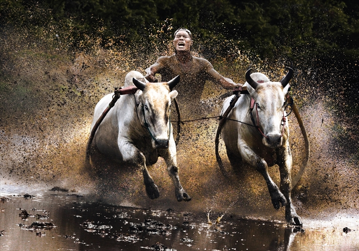 Action-Open-Winner-Chan-Kwok-Hung-Buffalo-Race